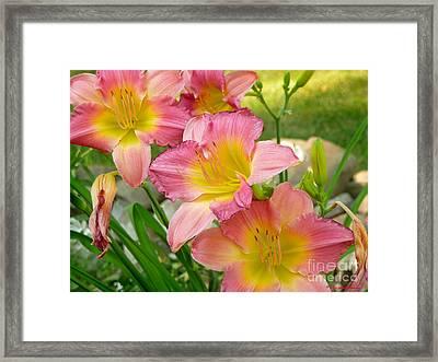 3 Lillies Framed Print
