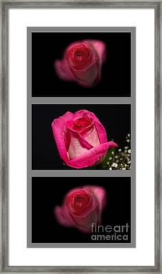3 Little Roses Framed Print