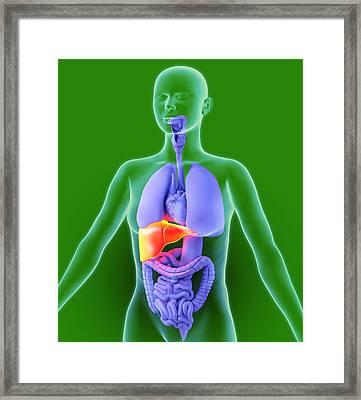 Liver, Artwork Framed Print by Roger Harris