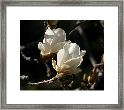 Magnolia World Of Beauty Framed Print by Valia Bradshaw