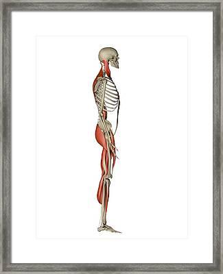 Male Muscles, Artwork Framed Print by Pasieka