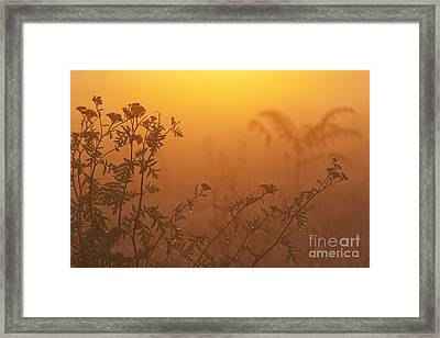 Meadow Flowers Framed Print