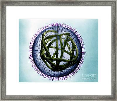 Measles Virus Framed Print