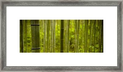 Mystical Bamboo Framed Print by Sebastian Musial