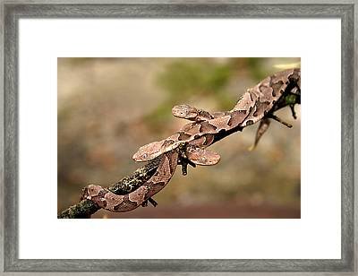 3 Of A Kind Framed Print by David Paul Murray