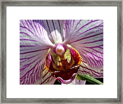 Orchid Flower Framed Print