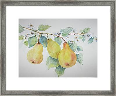 3 Pears Framed Print