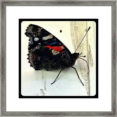 Phoenician Butterfly Framed Print