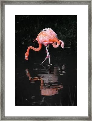 Pink Flamingos Framed Print by Naman Imagery