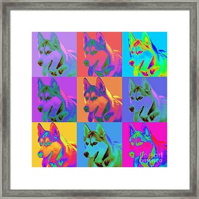 Pop Art Siberian Husky Framed Print by Renae Laughner