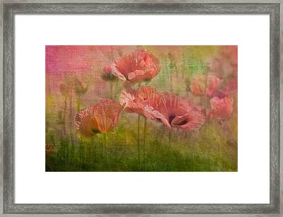 Poppies Framed Print by Carolyn Dalessandro