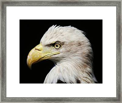 Proud Framed Print by Paulette Thomas