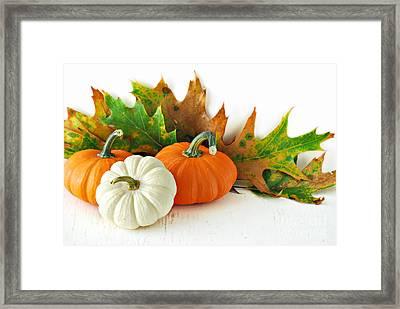 Pumpkins Framed Print
