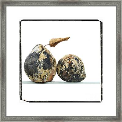 Quinces Framed Print