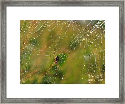Spiderweb Framed Print by Odon Czintos
