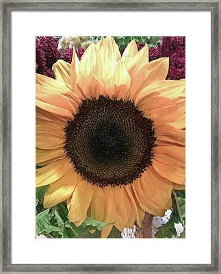 Sunflower Framed Print by Kristen Pagliaro