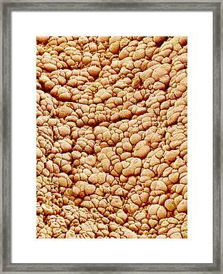 Surface Of Amnion, Sem Framed Print