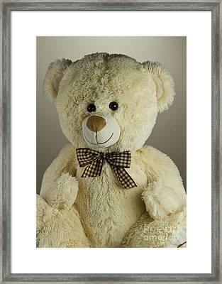 Teddy Bear Framed Print by Blink Images