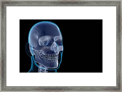 The Bones Of The Head And Face Framed Print