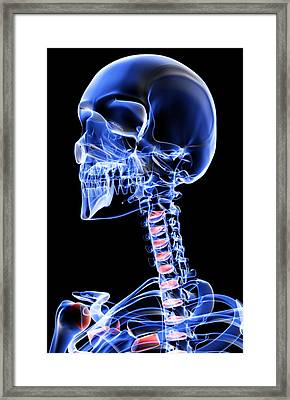 The Bones Of The Head, Neck And Face Framed Print