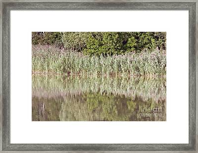 The Reeds Framed Print by Odon Czintos