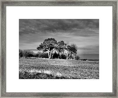 3 Trees Framed Print