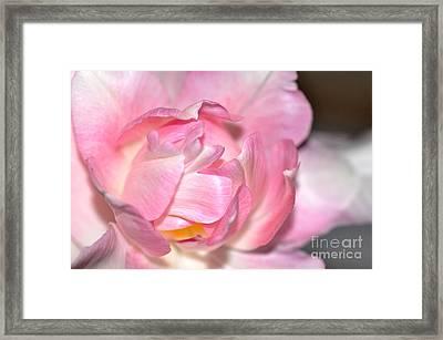 Tulipe Framed Print by Sylvie Leandre