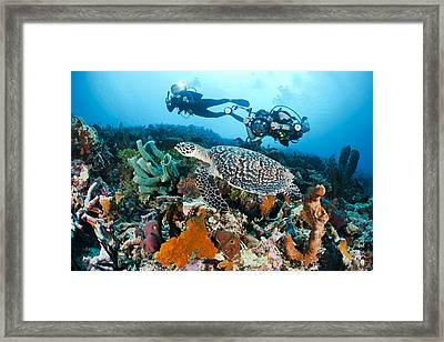 Underwater Photography Framed Print by Dave Fleetham - Printscapes
