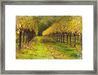 Vineyard Framed Print by Brandon Bourdages