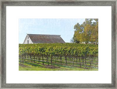 Vineyard With Old Barn Framed Print by Brandon Bourdages