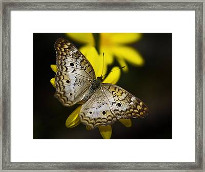 White Peacock Butterfly  Framed Print by Saija  Lehtonen