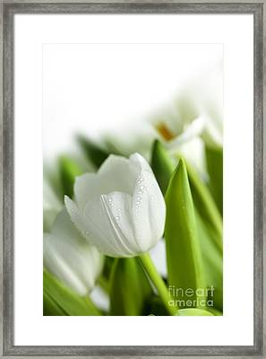 White Tulips Framed Print by Nailia Schwarz