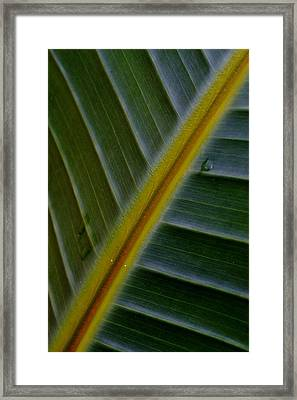 Framed Print featuring the photograph Wild Banana Leaf by Werner Lehmann