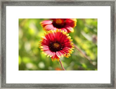 Framed Print featuring the photograph Wild Flower by Jeanne Andrews