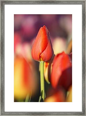 Woodburn, Oregon, United States Of Framed Print