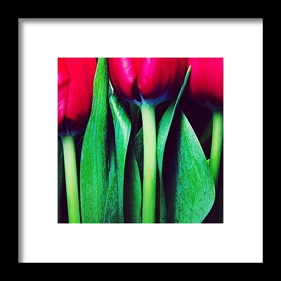 Abstract Flowers Framed Prints