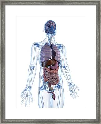 Male Anatomy, Artwork Framed Print by Sciepro