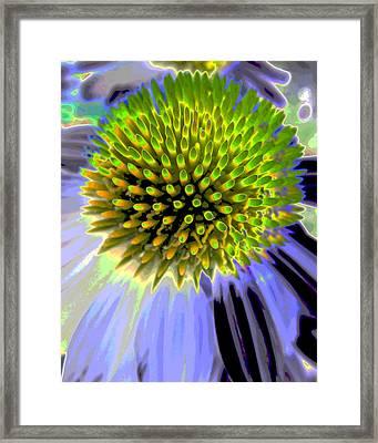 Coneflower Framed Print