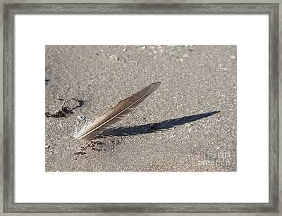 4-25 P M Framed Print by Lynda Dawson-Youngclaus