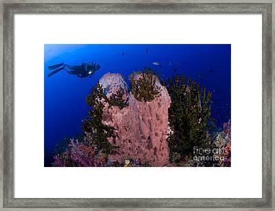 A Diver Looks On At A Giant Barrel Framed Print by Steve Jones