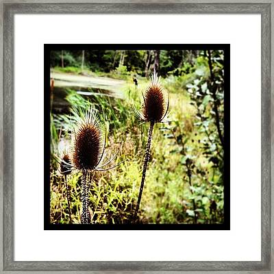 #abrilandrade Framed Print by  Abril Andrade Griffith