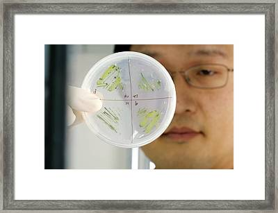 Algae Research Framed Print by Volker Steger
