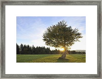Beech Tree, Schauinsland, Black Forest, Baden-wurttemberg, Germany Framed Print