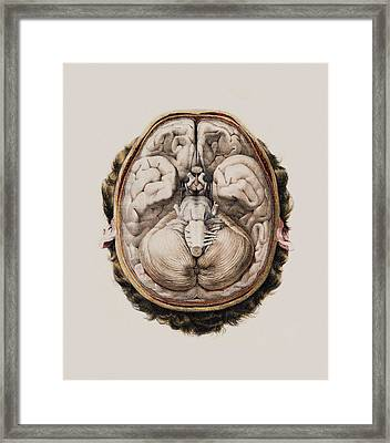 Brain Anatomy Framed Print by Mehau Kulyk