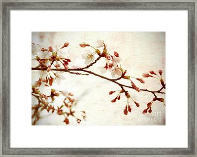 Cherry Blossoms Framed Print by Charline Xia