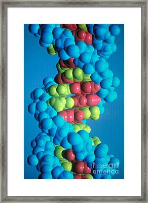 Dna Framed Print by Science Source