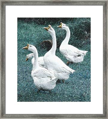 4 Ducks Framed Print