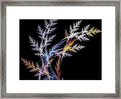 Fern Framed Print by Michele Caporaso