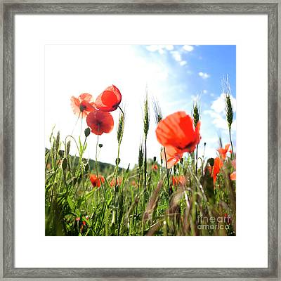 Field Of Poppies. Framed Print by Bernard Jaubert