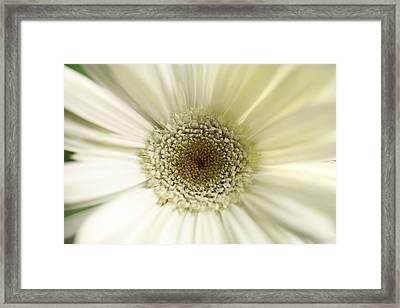 Flower Framed Print by Falko Follert